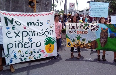 Foto extraída de [nota->http://www.ticotimes.net/2017/05/15/pineapple-expansion-costa-rica] de prensa del Tico Times (2017) titulada «Environmentalists demand halt to pineapple expansion»